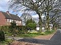 Daffs in Wythall - geograph.org.uk - 151831.jpg