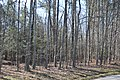 Dale's Pale in woods.jpg