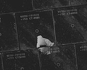 Damaged TPS Tiles of Endeavour (NASA S118-E-06229)