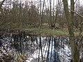 Damp deciduous woodland - geograph.org.uk - 1740794.jpg