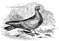Darwin Domestic 120.png