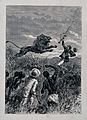 David Livingstone, holding a gun, attacked by a lion; Africa Wellcome V0018840.jpg