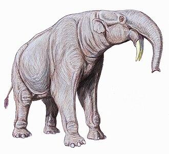 Deinotherium - Deinotherium giganteum restoration
