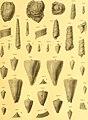 Die fossilien von Java auf grund einer sammlung von Dr. R.D.M. Verbeek und von anderen; (1891) (20917207815).jpg