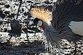 Dierenpark Emmen Feathers (11820625773).jpg