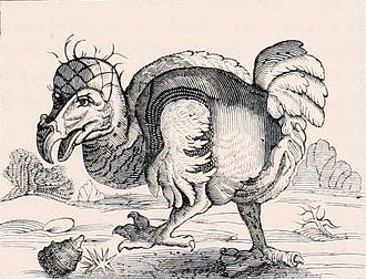 Willem Bontekoe - 1646 etching of a dodo Bontekoe claimed to have seen on Réunion. It was based on a sketch by Roelant Savery