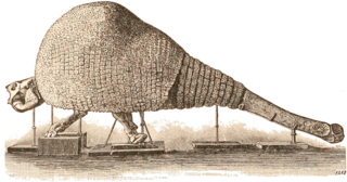 <i>Doedicurus</i> An extinct genus of mammals belonging to the armadillo order, Cingulata