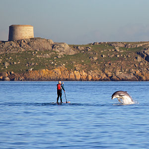 Bottlenose dolphin - Dolphin and a paddler at Dalkey Island