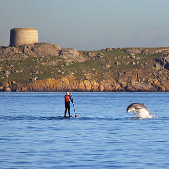 Dalkey - Bottlenose dolphin playing with a paddle boarder in front of Dalkey Island