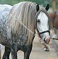 Drum Horse (2694411914).jpg