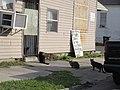 Dryades Sunday Morning NOLA Feb 2017 Cats and Sign.jpg