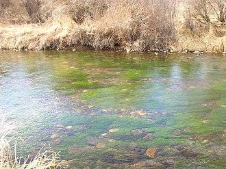 DePuy Spring Creek - Image: Dupuy Spring Creek 0108Gin Clear