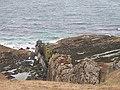 Dyke near Rubh'a' Mhàil - geograph.org.uk - 989728.jpg