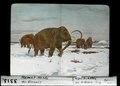 ETH-BIB-Mamut-Herde der Eiszeit-Dia 247-03313.tif