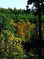 Early Autumn - panoramio (1).jpg