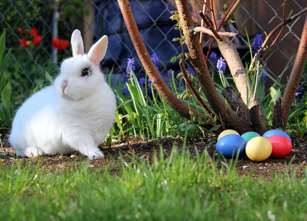 file easter bunny jpg wikimedia commons