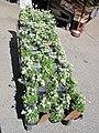 Edelweiss in the market of Samoens 1.jpg