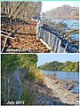 Eighteen months of growth along a lower American River bank (9415753835).jpg