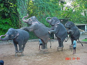 Elephant dance at galleryfull.jpg