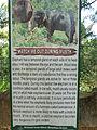 Elephant musth.JPG