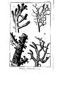 Encyclopedie volume 5-142.png
