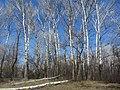 Engels, Saratov Oblast, Russia - panoramio (25).jpg
