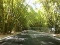 Entrada Aeroporto de Salvador - Túnel de Bambu - panoramio.jpg