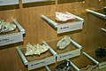 Exhibits of minerals in the National Museum of Slovenia 04.jpg