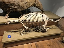 FMNH Pronothrotherium .jpg