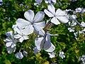 Fale - Giardini Botanici Hanbury in Ventimiglia - 55.jpg