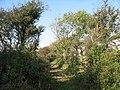 Farm Track to Mynydd-y-gof Farm - geograph.org.uk - 984514.jpg