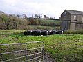 Farm at Derryhaw - geograph.org.uk - 617823.jpg