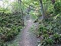 Fern Forest - geograph.org.uk - 1287657.jpg