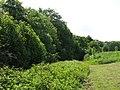 Field and woodland west of Halgut Burn - geograph.org.uk - 843635.jpg