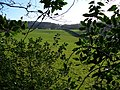 Fields by Ridden Corner Copse - geograph.org.uk - 303094.jpg