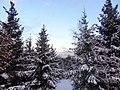 Fir Trees In Winter (21395071).jpeg
