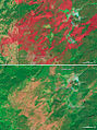 Fire and the Future of Yellowstone - NASA Earth Observatory.jpg