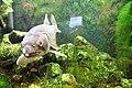 Fish (512712459).jpg