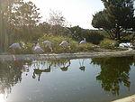 Flamingos no Badoca Park.JPG