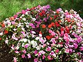 Fleurs à Royan - panoramio.jpg