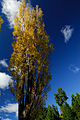 Flickr - JennyHuang - Tree and sky in New Zealand.jpg