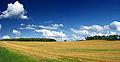 Flickr - Nicholas T - Xanthophyll.jpg