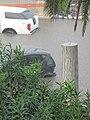 Flood - Via Marina, Reggio Calabria, Italy - 13 October 2010 - (80).jpg
