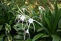 Flora de la Isla Sur-Nueva Zelanda08.JPG