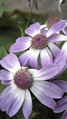 Flower-img.png