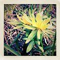 Flower power (5612938073).jpg