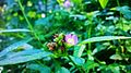 Flower with Green.jpg