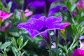 Flowers (157722105).jpeg