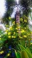 Flowers Palm Tree Boracay Philippines.jpg