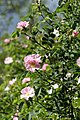 Flowers on Trout Lane - panoramio.jpg